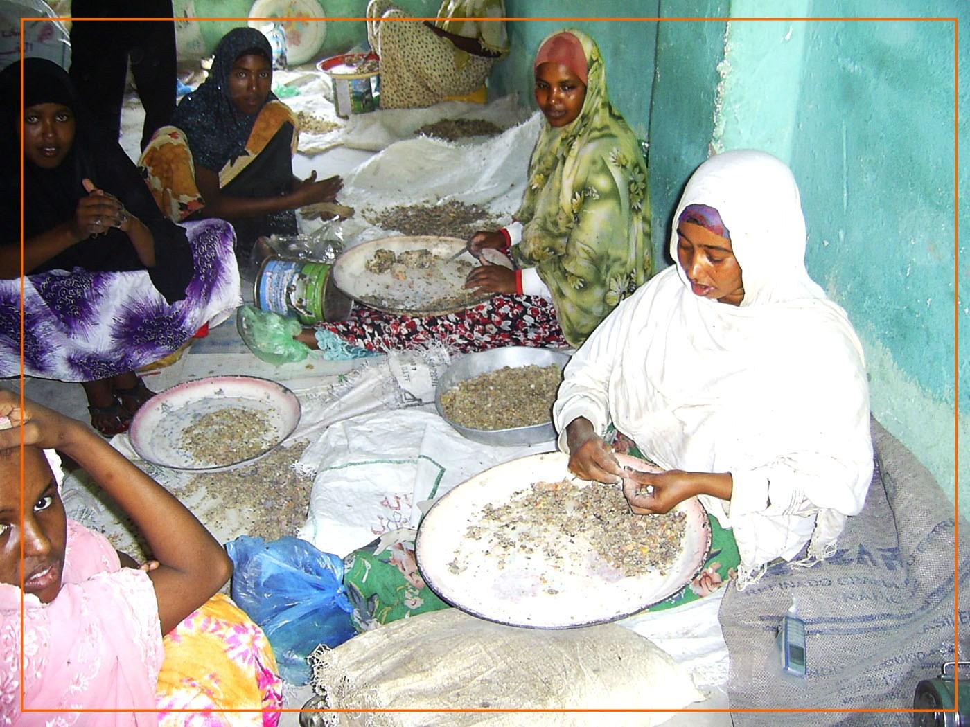 WomenCleaningGumResins_SOMALILAND