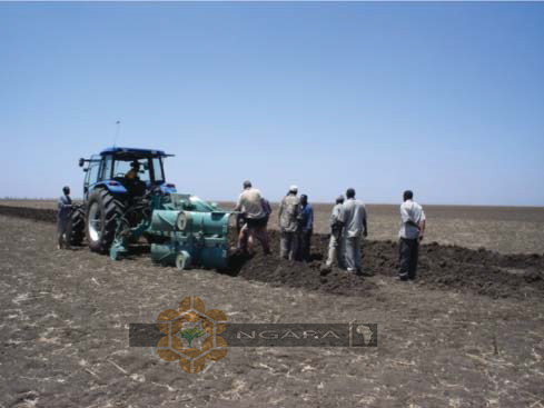 Treno plough in Sudan ~ NGARA
