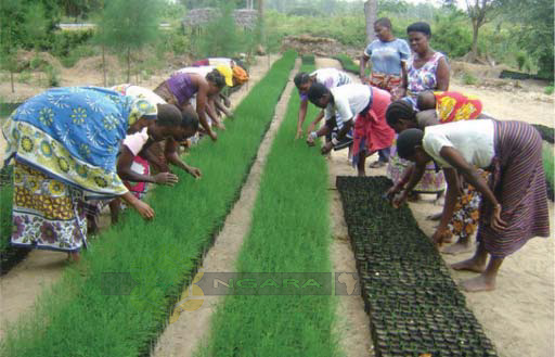 Members of a Community Forest Association Participating in Tree Nursery Management Activities